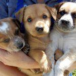 puppy-faces