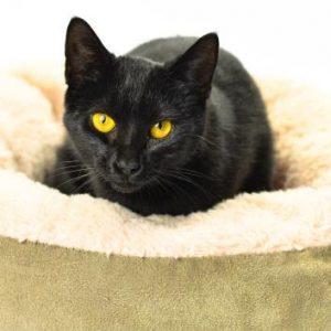Daisy May the black cat
